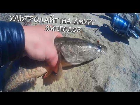 Рыбалка на Амуре, Змееголов на спиннинг, Рыбалка на ультролайт.
