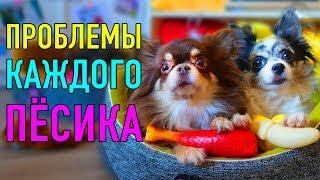 ПРОБЛЕМЫ КАЖДОГО ПЁСИКА   ПАРОДИЯ Magic Pets