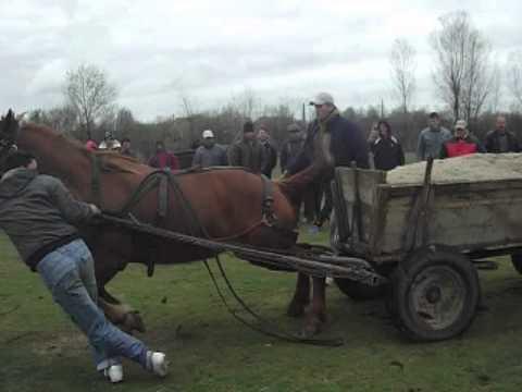 Concurs de cai de Florii in Osica de Sus 1