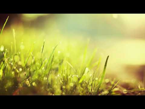 3 HOURS Relaxing Music | Spa Background | Meditation - Yoga - Massage - Reiki - Study