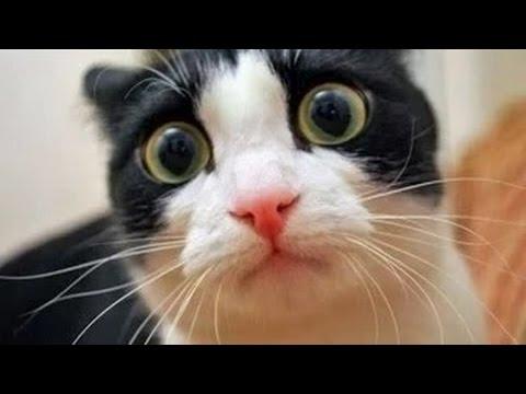 Videos de risa 2014 nuevos -  Videos de Risa de Gatos Chistosos -