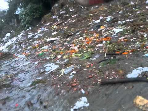 pollution in river ganga and its effects.wmv