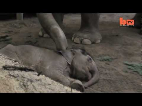 Touching Footage Of Elephants