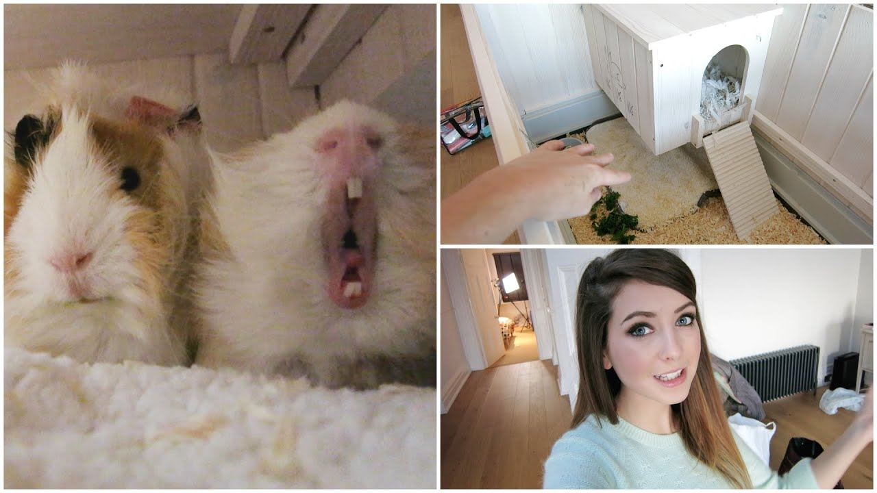 Guinea Pig House Tour Amp Getting Organised Youtube