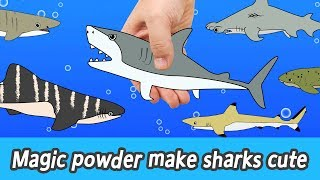 [EN] Magic powder make sharks cute! animals names for kids, coco animal animation, collectaㅣCoCosToy