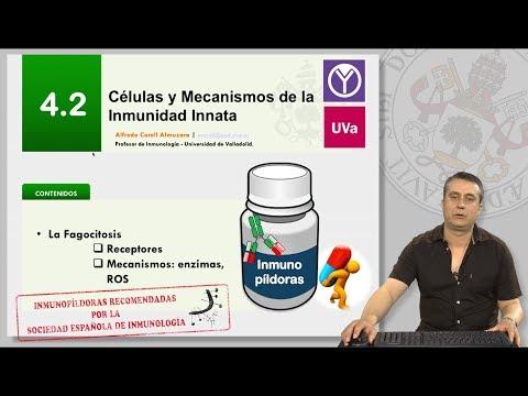 4.2 CÉLULAS Y MECANISMOS DE INMUNIDAD INNATA.