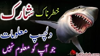 Shark Information Urdu Hindi Whale Shark Fish Facts Interesting