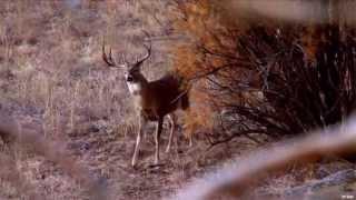 Hunting Deer in Northwest Oklahoma
