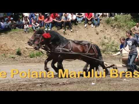 CAII LUI NELUTU, POIANA MARULUI BRASOV, CONCURS PERECHI 3 IUNIE 2012