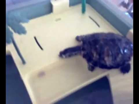 tartaruga prende cibo e si tuffa PAPERISSIMA ANIMALI
