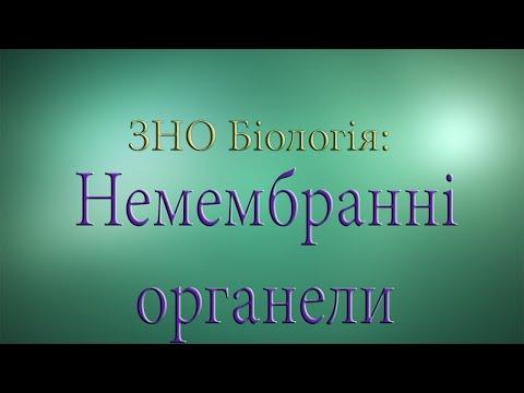 ЗНО Біологія  Немембранні органели