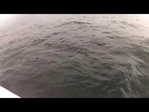 New Jersey Striped Bass Fishing