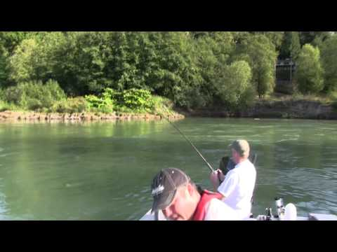 2011 0920 Cowlitz River Salmon Fishing with Guide, Lance Fisher.mp4