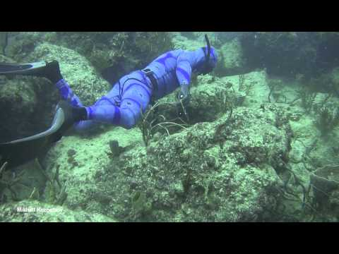 My Miami videoblog, hog fish.