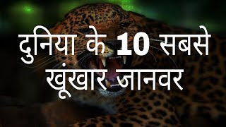 दुनिया के 10 सबसे खूंखार जानवर   The world's 10 most dreaded animals   Hindi Education.
