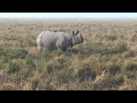 Wildlife of India, Part VI:  Kaziranga National Park, Assam, India