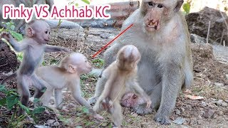 You Will Wonder And Laugh Per Year When You See Brave Baby Pinky Warning King Achhab KC / PTM 913