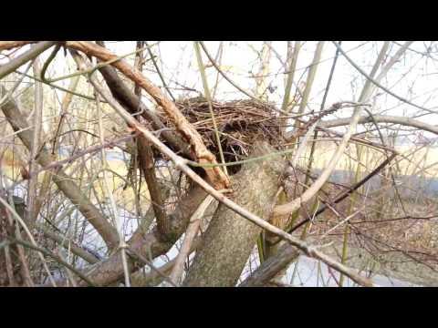 """Vogelschutz im eigenen Garten - Erklärung zum Video """"Winterarbeiten im Garten"""""""