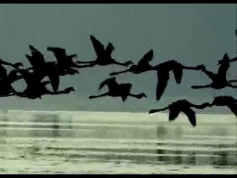 The Cinematic Orchestra - couter sur Deezer