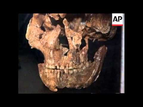 """SOUTH AFRICA: """"APEMAN"""" SKULL DISCOVERED (2)"""