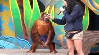 Very Smart Orang Utan - EXTREMELY FUNNY