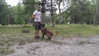 MIchael Fraas - Precision dog sport | Solid K9 Training Dog Training