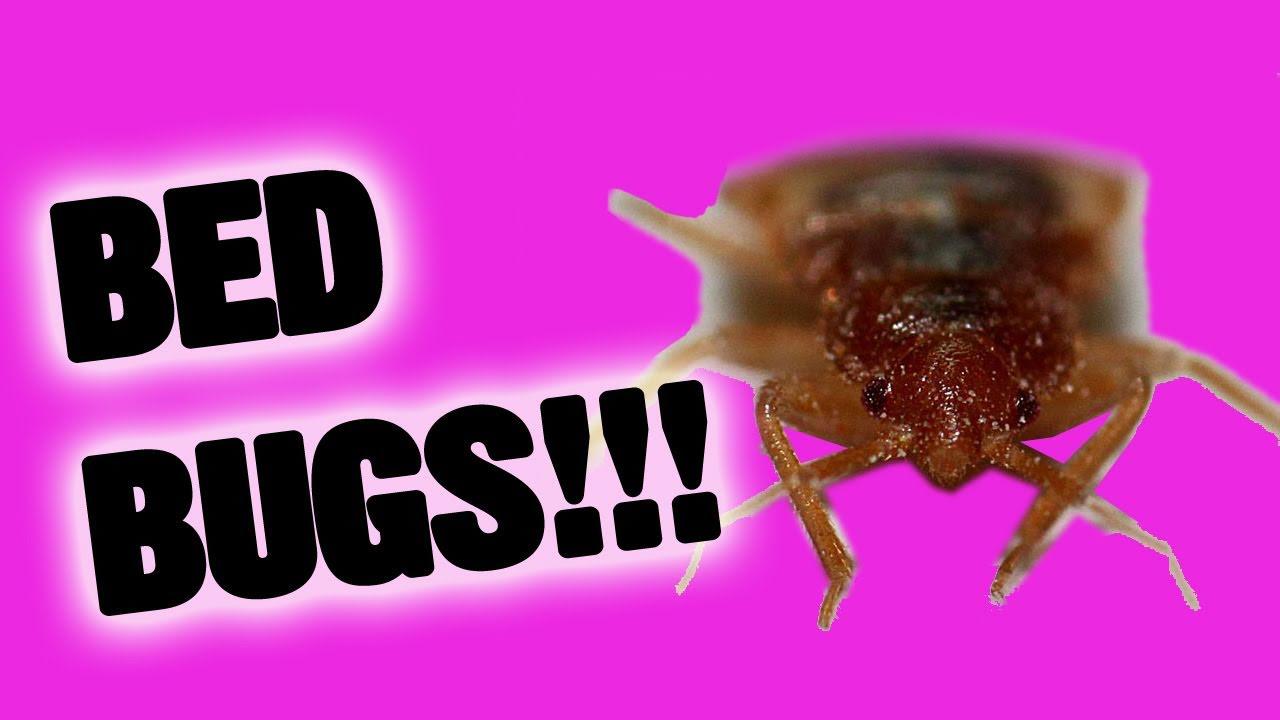 Bed bug poop hard