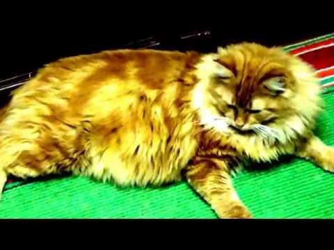 Видео о кошках.Кот, по имени -  Рыжий. часть 2