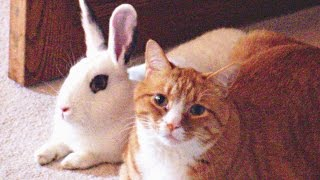 Cute Rabbits Playing With Cats Compilation NEW