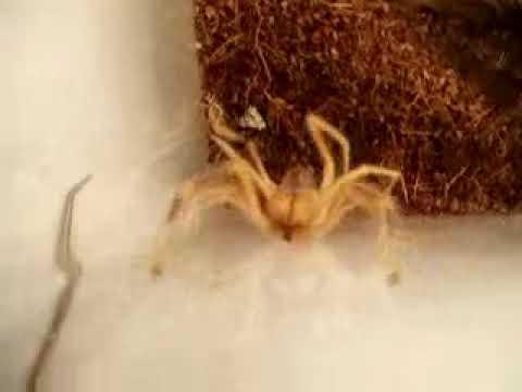Feeding a Sun Spider