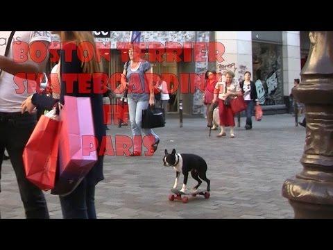 Perros - Perro skateboard con monopatin por Paris