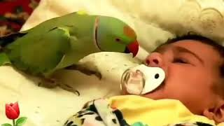 Parrot sings good night song for baby child