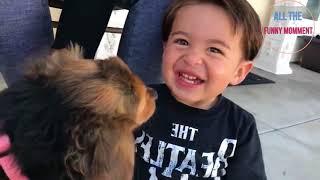 приколы 2017: приколы с детьми, приколы с животными. Fun 2017: fun with kids, fun with animals.