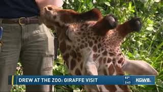Drew at the zoo: giraffe visit
