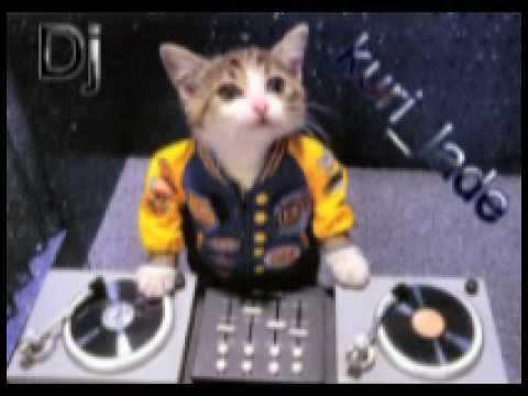 Dj Kuri Slemani 3 Paltelk video
