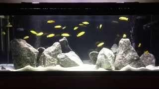 New Lake Malawi Mbuna Fish Tank   How to aquascape Mbuna tank   Tips on Rockscape   African Cichlids