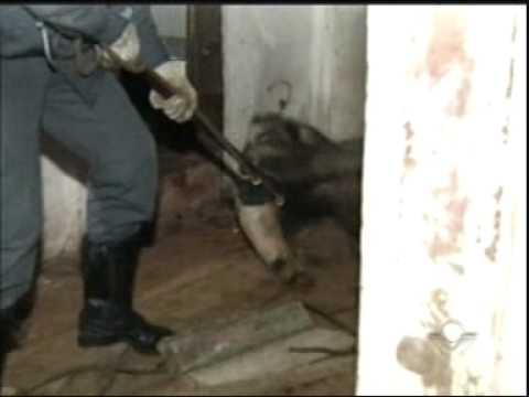 Tamanduá Bandeira é resgatado no quintal de uma casa no Bairro Alto Umuarama