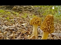Game On! How to Find Wild Morel Mushrooms