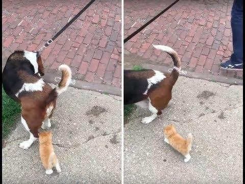 Бездомный котенок догнал мужчину с собакой и пошёл с ними домой. Но вот что сделала жена дома!