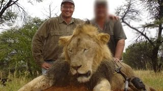 Cecil The Lion | Researcher Calls For An End To Lion Hunting