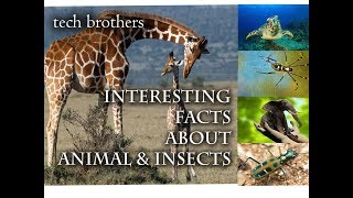 Interesting Facts about Animals and Insects by tech brothers