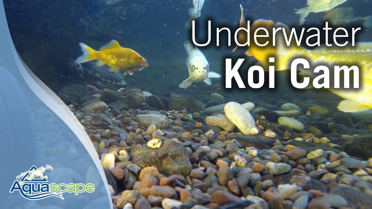 Aquascape Koi Cam