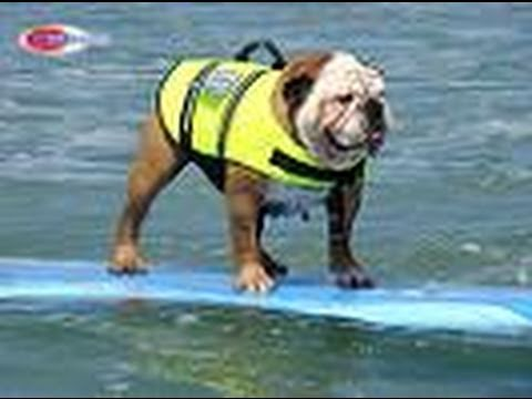 Best of 2010 Helen Woodward Surf Dog Surfing Contest