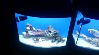 Water changes verse supplements experiment video 1