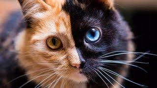 Animals With Rare Unique Markings!
