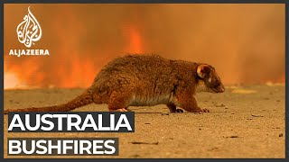 Australian bushfires: Blazes taking toll on economy