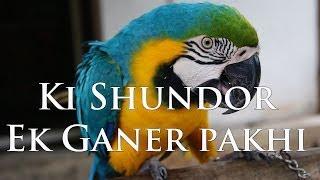 Ki shundor ek ganer Pakhi HQ Audio