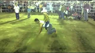 Children riding Bull at Mexican Rodeo