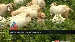 A rare friendship of goats and dogs: Asianet News Special