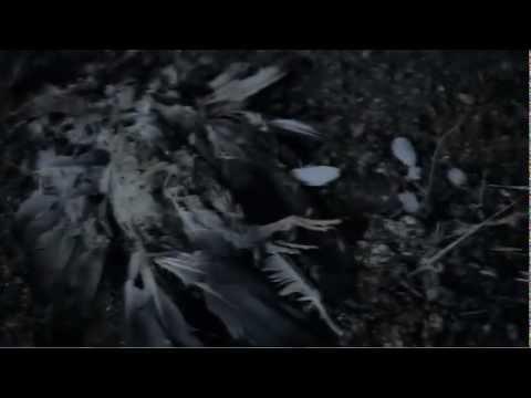 Gary Numan - The Fall